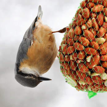 How to Make Bird Seed Pine Cones